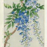 Yuichi Osuga Spring Flowers Wisteria Woodblock Print