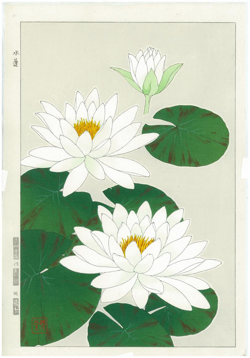 Shodo Kawarazaki Spring Flowers Suiren Woodblock Print