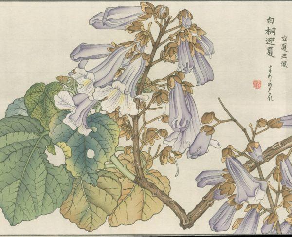 Four Antique Botanical Woodblock Prints Unknown Artist