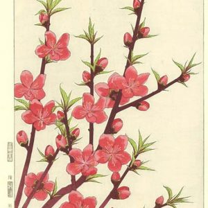 Kawarazaki Shodo Flowering Peach Woodblock Print